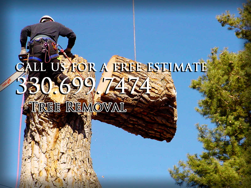 lamanna's tree service and stump grinding and stump removal